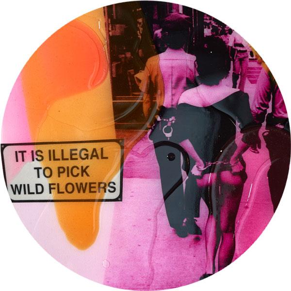 Wild Flowers Nahaufnahme - FancyPics
